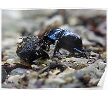 Dung Beetle Insect Dung Forest Nature Poster
