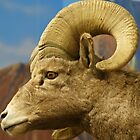 Big Horn Ram by pcfyi