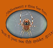 Halloween Greeting Card - Marbled Orb Weaver Spider by MotherNature