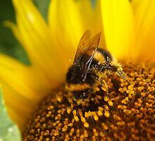 Busy Bee by JupiterStar