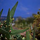 New Mexico Cactus by Sheryl Gerhard