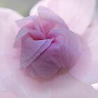 softly, softly unfolding by Glenda Williams