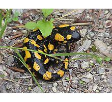 Fire Salamander Animal Amphibian Nature Yellow Photographic Print