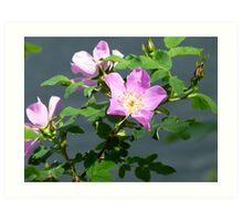 Wild Rose Flower Plant Nature Art Print