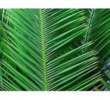 Palm Leaf Tree Green Photographic Print