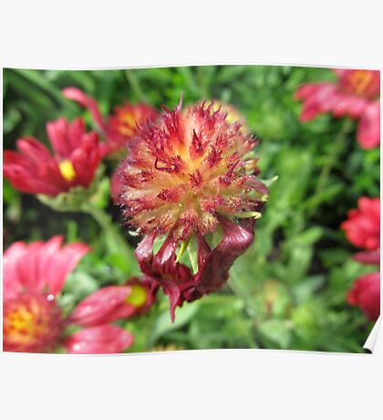 Plant Flower Nature Garden Plant -flowered Poster