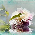Elegant Peony by Trudy Wilkerson