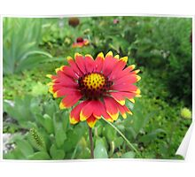 Flower Garden Plant Nature Garden Plant Poster