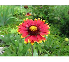 Flower Garden Plant Nature Garden Plant Photographic Print