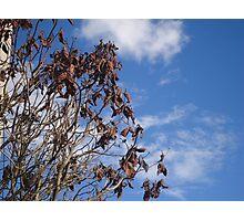 Bogotá Dried Leaves Soledad Sadness Sad Tree Photographic Print