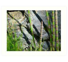 Scouring Rush Horsetail Plant Rock Nature Art Print