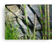Scouring Rush Horsetail Plant Rock Nature Canvas Print