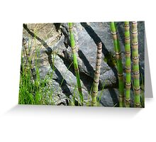 Scouring Rush Horsetail Plant Rock Nature Greeting Card