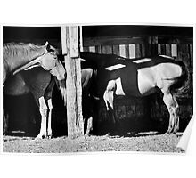 Horses in the Barn Poster