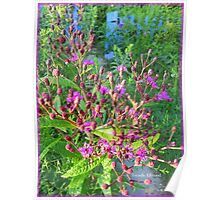 Ironweed in the Garden Poster