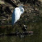 White Egret by Eva Kato