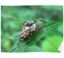 Arachne Spider Gliedertier Invertebrates Poster
