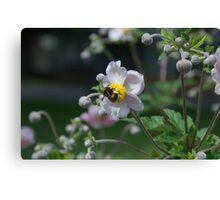 Flower Purple Insect Hummel Canvas Print