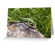 Lizard Sand Lizard Reptile Nature Animal Greeting Card