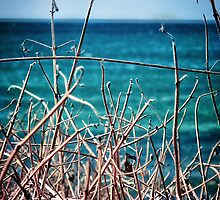 seagrass by © Karin Taylor
