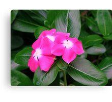 Flower Pink Nature Macro Canvas Print