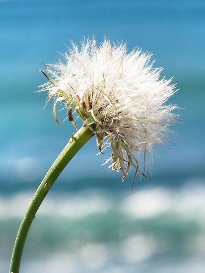 dandelion sea by © Karin  Taylor