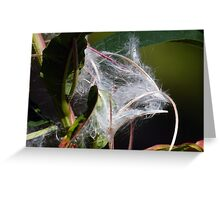 Withered Fire Weed Flower Wild Flower Plant Greeting Card