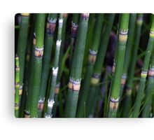 Scouring Rush Horsetail Plant Nature Green Canvas Print