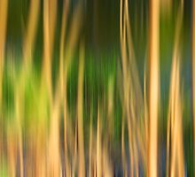 Wallpaper Desktop Background Nature Grass Pc by HQPhotos