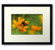 Bumble Bee Busy Framed Print