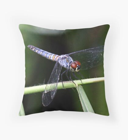 Orthetrum boumiera (Brownwater Skimmer) Throw Pillow