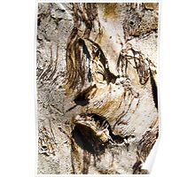 Ghastly Image in a Paperbark Tree Trunk. Poster