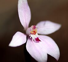 Pink Fairy Orchid by Michelle Cocking