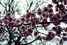 Early Bloomers by Zoe Harris