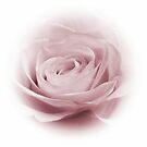 Lilac Whisper by shalisa