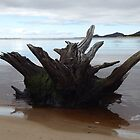 Driftwood, Hellyer River. Tasmania. by Esther's Art and Photography