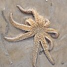 Starfish in the sand. by Esther's Art and Photography