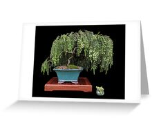 Potted wattle Greeting Card