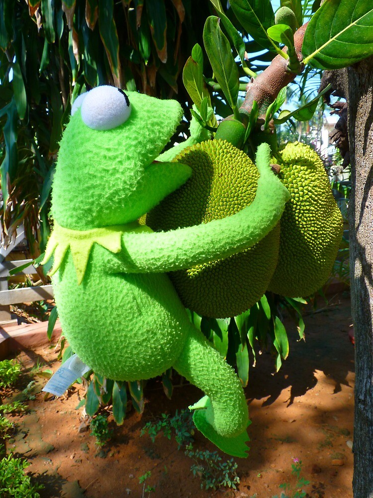 Jack Fruit Green Large Frog Kermit by HQPhotos
