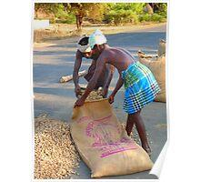 Peanut Peanuts Harvest Filling Bag Work Poster