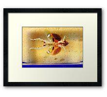 Mantis bug  Framed Print