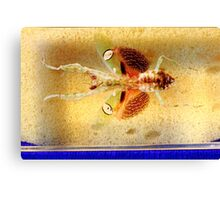 Mantis bug  Canvas Print