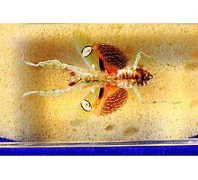 Mantis bug  Photographic Print