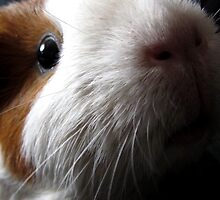 Rambo - guinea pigs by Enri-Art
