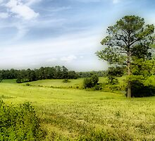 The Meadow by ImagesByTom