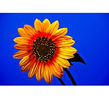 Stylized Sunflower Photographic Print