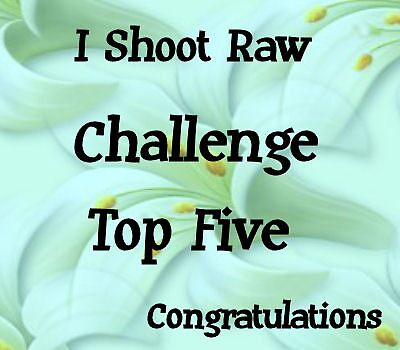 I shoot raw .. top five banner by LoneAngel