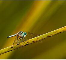 Blue Dragon Photographic Print