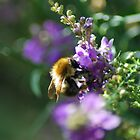 busy bee  by grostique