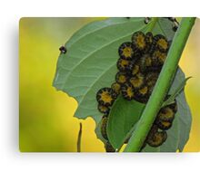 Freaky worms Canvas Print